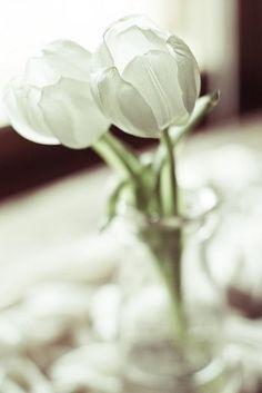 White tulips. ♥❀ ♢♦ ♡ ❊ ** Have a Nice Day! ** ❊ ღ‿ ❀♥ ~ Th 21st May 2015 ~ ❤♡༻ ☆༺❀ .•` ✿⊱ ♡༻ ღ☀ᴀ ρᴇᴀcᴇғυʟ ρᴀʀᴀᴅısᴇ¸.•` ✿⊱╮ ♡ ❊ ** Buona giornata ** ❊ ✿⊱╮♥