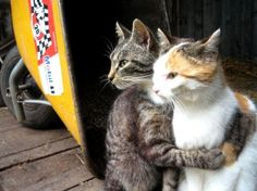 Cats hugging each other.