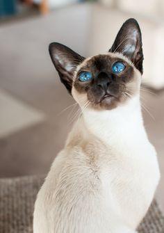 Olhos azul da cor da mar