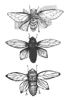 insects, black and white