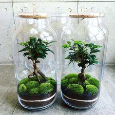 How to make a forest in a jar, your own ecosystem in a jar for inspiration – Ho… - Mini Garden Terrarium Plants, Glass Terrarium, Succulent Terrarium, Indoor Garden, Indoor Plants, Plant In Glass, How To Make Terrariums, Decoration Plante, Paludarium
