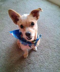 LOST DOG: 09/14/2017 - Tacoma, Washington, WA, United States. Ref#: L36801 - #CritterAlert #LostPet #LostDog #MissingDog