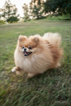Rachel Wilson's Doggie #dog #Dowagiac #Michigan #pet