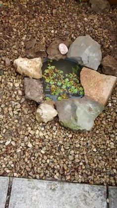 how to make a mini pond in a bowl