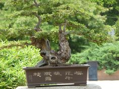 Penjing (bonsai) Garden in Beijing