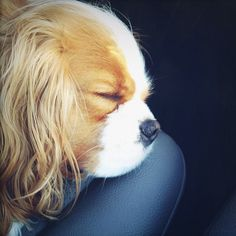 napping in the car while we wait.