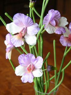 орхидеи | Записи в рубрике орхидеи | TeraO : LiveInternet - Российский Сервис Онлайн-Дневников