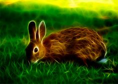 ACEO art print  Hare   0291 F Rabbit Art Hare Art by AnimalPopArt, $5.00