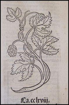 Hops illustration from theDeHortus Sanitatis (1491)