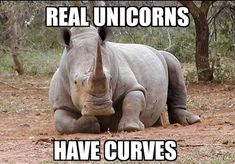 Farker lilyspad posted this voluptuous unicorn in this weekend's Caturday thread on Fark