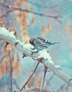 Demedim mi bir gün susar şarkılar,  Sesine ses veren, rüzgâr olur... M