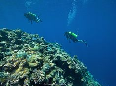 Mermaid Reef, Rowley Shoals