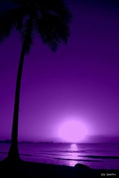 Purple Aesthetic Discover Pupura Puerto Rico by Edward Smith Purple Love, All Things Purple, Shades Of Purple, Deep Purple, Purple And Black, Purple Sunset, Purple Stuff, Purple Beach, Pink