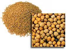 Mostaza:  Estas semillas son una muy buena fuente de omega-3 los ácidos grasos, así como calcio, fibra, hierro, magnesio, niacina, fósforo,proteínas, selenio y zinc.   Por sus propiedades, estimula la producción de los jugos gástricos que ayudan a reducir los problemas digestivos.