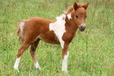 superbe chevaux sauvages - Recherche Google
