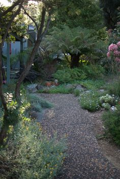 Kieth's Native Garden