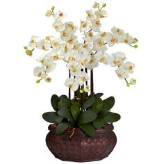 The contrast of the cream blooms and the dark green leaves of this Large Phalaenopsis Orchid silk flower arrangement will give your decor a lift and is presented by ExcellentSilkFlowers.com.