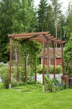 Pergolan juurelle on istutettu useita kärhöjä, köynnöshortensia ja viiniköynnös. Vielä kasvit eivät ole hurahtaneet kattokorkeuksiin asti, mutta parin vuoden kuluttua ne jo peittävät rakenteen alleen.
