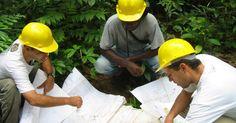 Guia de carreiras: engenharia florestal