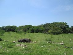 Vacant residential / agricultural land for sale in black river st elizabeth Agricultural Land For Sale, Landing, Acre, Golf Courses, River, House, Black, Home, Black People