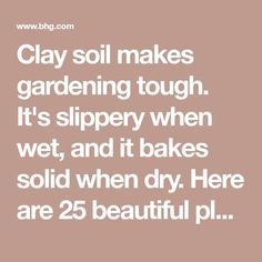 Clay soil makes gardening tough. It's slippery when wet, and it bakes solid when dry. Here are 25 beautiful plants that grow well in clay.