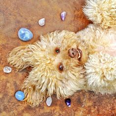 Taking pampered pooch to a whole new level. All the crystal energy put a grin on Sirus' face!