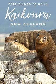 Looking for free and cheap things to do in Kaikoura? It's not known as being the most budget-friendly destination, so you may be surprised to find that there are plenty of free and affordable activities on offer for the whole family to enjoy! Best Travel Guides, Travel Advice, Travel Ideas, Travel Inspiration, Travel Tips, Travel Destinations, New Zealand Itinerary, New Zealand Travel, Cheap Things To Do