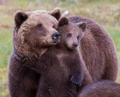 Bear cubs by Jorma Lehti on 500px