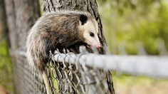 HOW TO LIVE WITH WILDLIFE | Attract critters to your garden and still keep them out of your attic, bird feeder, and trash cans.