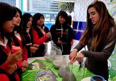 Al norte de la ciudad, en el boulevard de la avenida Naciones Unidas, se desarrolló la  feria Pongamos las Manos por el Ambiente de Quito, en la que los estudiantes expusieron a los presentes la importancia de reciclaje e ideas para reciclar.