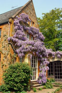 Coton Manor, Wisteria in bloom. Northamptonshire by Darren&Ness on Flickr.