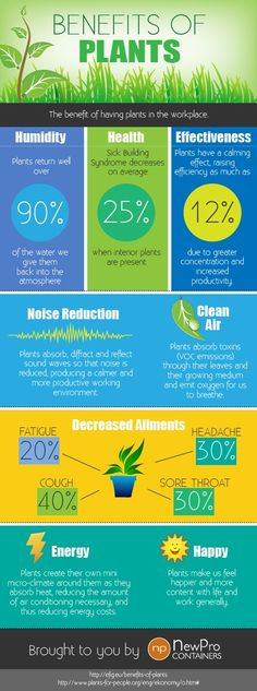 Did you know that decorating with plants also has amazing health benefits? Check them out here.