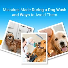 You must avoid some #common #mistakes during #dog #wash to give you pet a great wash. To learn more, go through this blog @ http://www.happybays.ca/blog/mistakes-made-during-a-dog-wash-and-ways-to-avoid-them/