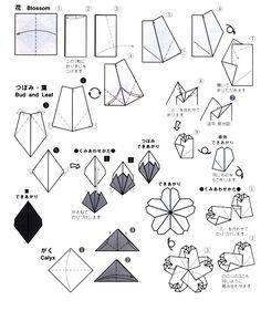 Folding of Sakura