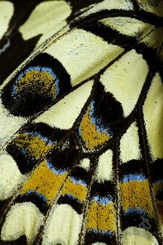 Butterfly Wing - photo by Behrooz Sangani at bsurprised.aminus3.com