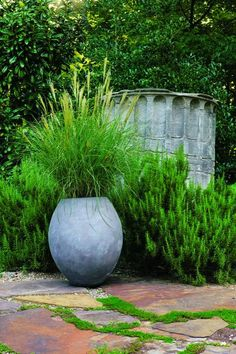 A single, graceful bamboo muhly grass (Muhlenbergia dumosa) in an oversize container makes a dramatic solo performance in an amphitheaterlike part of Cheekwood's Herb Study Garden.