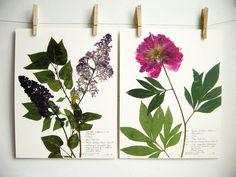 Lilac and Peony Print Set Original Herbarium by DayThreeCreations