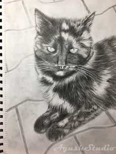 My cat :) #cat #kot #macka #drawing# #rysunek #pencil #graphite #Graphitepencil #pencil #drawing #ryssowanie #ołówek #grafit