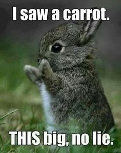 Hmm I found a carrot this big ................................................. ...................................................