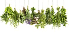 Tired of trying to decode pharmacy labels? You might already have a natural remedy in your pantry that could do the trick. Discover these amazing herbs that can help with everything from congestion to indigestion. Super herbs that can help fight acne, diabetes and even cancer. Check out these 12 healthy herbal remedies for home. Ginger Ginger stimulates the body to release enzymes to break down food so that nutrients can be easily absorbed – a great cure for nausea and dizziness. Garlic Ga