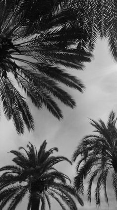 Palm trees photography black and white summer palm trees mov Black And White Picture Wall, Black And White Wallpaper, Black Aesthetic Wallpaper, Black And White Pictures, Aesthetic Backgrounds, Aesthetic Iphone Wallpaper, Aesthetic Wallpapers, Scenery Wallpaper, Nature Wallpaper
