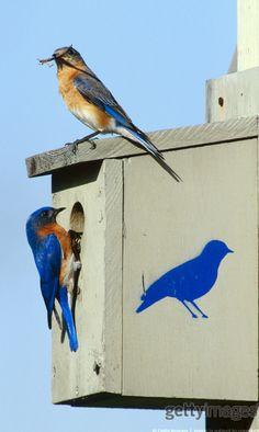 Bird house