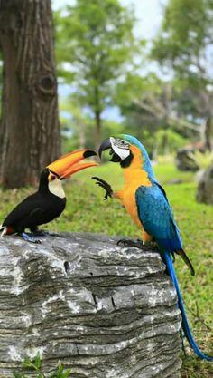 Toucan & perroquet