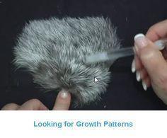 Painting Animal Fur in Acrylic