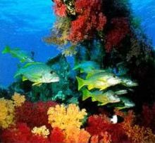 Coral and Fish in the Red Sea of Egypt. Major Cities and Towns