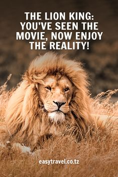 The Lion King: you've seen the movie, now enjoy the reality! Lion Quotes, Lion King Movie, Tanzania Safari, Life Is An Adventure, Dreaming Of You, Real Life, Dreams, Eyes, Check