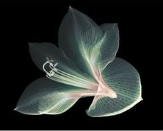 Nick Veasey's very beautiful X-ray picture. Amazing pictures at  http://www.nickveasey.com/