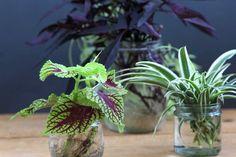 grow-indoor-plants-in-glass-bottles-apieceofrainbow (16)