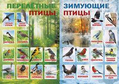 "Photo from album ""стенд"" on Yandex. Biology Classroom, Teaching Biology, Teaching Kids, College Problems, Solar System For Kids, Montessori Kindergarten, Geography For Kids, Preschool Colors, Forest School"