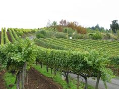 Sonoma, California: Farm to Table and Grape to Glass